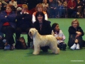 jaevamaewest_crufts1999